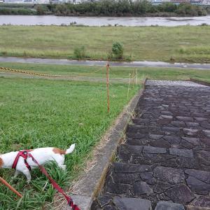 【台風の雨で河川敷は…】