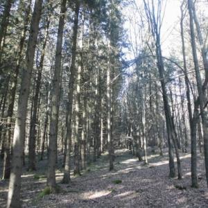 森の散歩も気遣いが必要