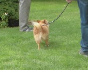 仲良くなりにくい小型犬