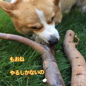 魔法の枝☆