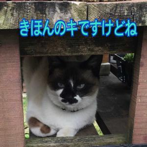 ノラの知恵袋(^^)