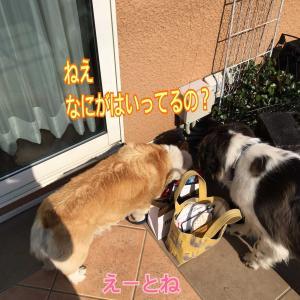 小型犬ジル(*´∀`)