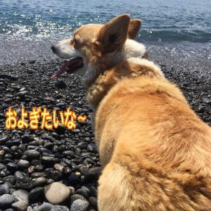ピタっと犬♡