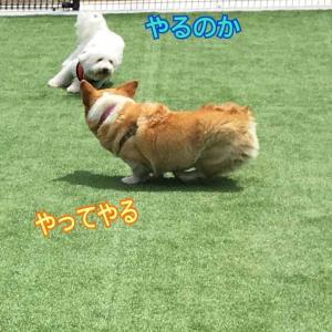 こんなジルも悪くない(^^)