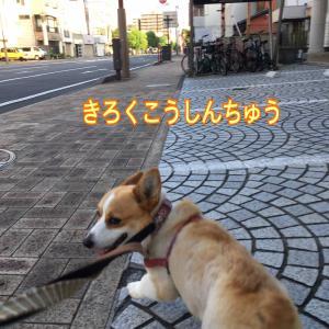 ネコだけじゃないのだ(^^)