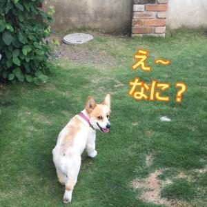 白い犬(^^)