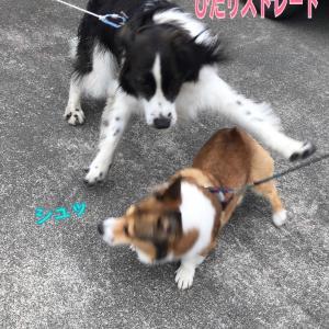 小型犬のキモチ(*´-`)