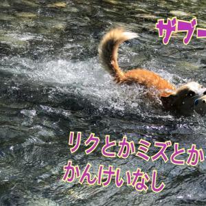 ジルの川遊び♪