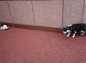夏休み猫特集