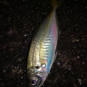 渓流釣り同好会によるアマゴ釣りオフ