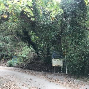 千葉の林道