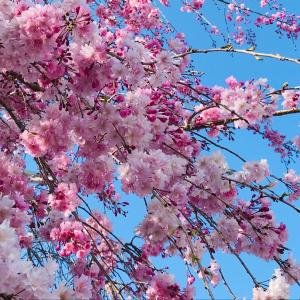 春の大掃除でリフレッシュ✿訪問時の感染防止策2020
