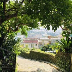 春の訪れは…沖縄旅やベランダ庭のバードウオッチングから?!