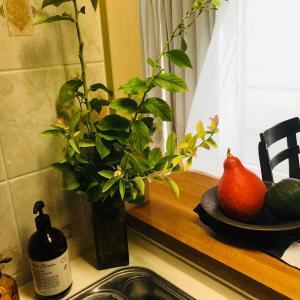 秋の訪れと共に?!ベランダ庭での観葉植物サンセベリアの挿し木成功!!