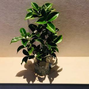 秋から冬へ…剪定した葡萄とオリーブのリース🎄理想の花瓶に生けた銀木犀2020