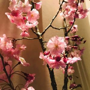 コロナ禍…初めての枝垂れ桜でのおうち花見?!開運に導く春のピンクカラー