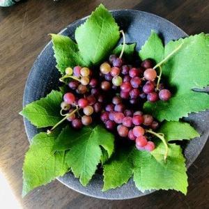 残暑お見舞い&立秋の葡萄ディスプレイ2019