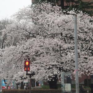 3月27日(火)晴れ