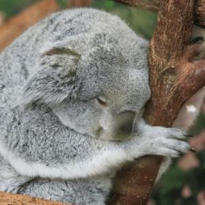 確率4/10万人 短時間睡眠の遺伝子