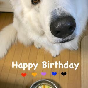 Happy Birthday Angelo!