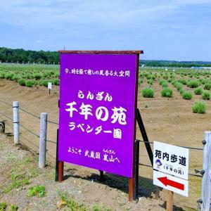 紫拡がる日本最大級の花園へ行ってきまして