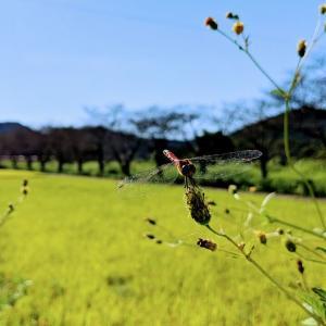 今日は「枕草子」 秋の段に相応しい日