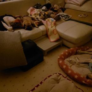おやすみなさい~夜のソファー~