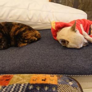 シンクロ睡眠 犬猫MIX