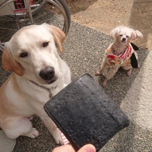 マークの介助犬修行~色んな物を拾う~