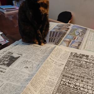 パナップと新聞