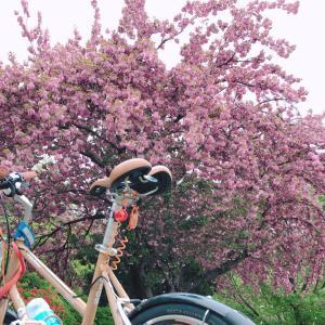 自転車布教活動はつづきます