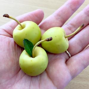 粘土で作った青リンゴ