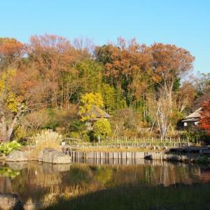 馬場花木園の紅葉