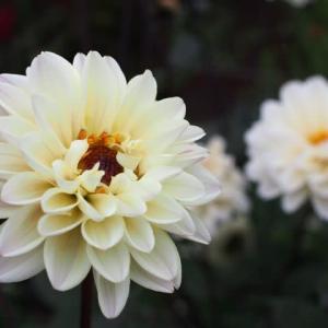 山下公園 10月に咲く花いろいろ