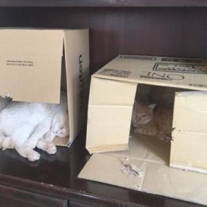 ダンボール箱で収納箱作ってみた!