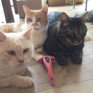 男の子3匹の床屋と猫アレルギー