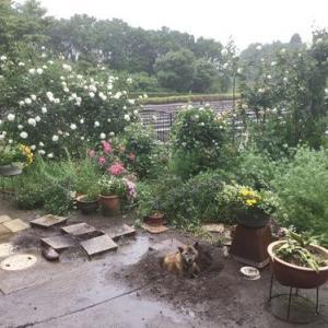 風雨強しの日