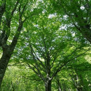 「心の中にある森創りは、山となる。^^」