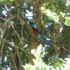 中米3か国旅行 その28 世界で一番美しい鳥、ケツァール☆