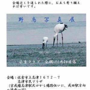 「野鳥写真展」