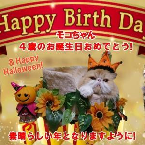 【猫動画あり】愛猫お誕生日!〓〓モコちゃん4歳になりました~!Happy Birthday to Moko!&Happy Halloween!