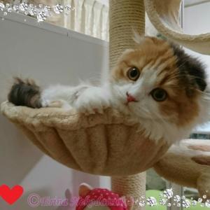 ペットロスから新しい家族猫「レナちゃん」  を迎えての「あらためてのご挨拶」&「ねこ検定チャレンジ!」
