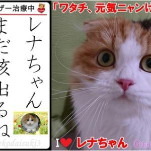 愛猫スコティッシュフォールドの「レナちゃん」が原因不明の病気、定期的に動物病院で治療中!完治するまでがんばろうね〓         猫のかかりやすい代表的な病気について