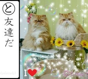 ◆猫かるたを猫川柳で作るシリーズ第2弾 ! 「さ行」&「た行」編  あっ!チャレンジしてみると大切な事は猫が教えてく<br />れる!脳トレ&ボケ防止に最高!猫好きさんに伝えたい!可愛いペルシャ猫の写真と共にいつでもみんなで楽しめ<br />る! 『オリジナル猫かるたで猫川柳作り』♪〓