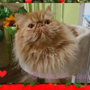 ◆可愛い猫川柳はじめました!