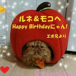 〓2匹のペルシャ猫「ルネちゃん&モコちゃん」3度目の秋の思い出『Happy Halloween♪』&『3歳のお誕生日のお<br />祝い♪』〓〓