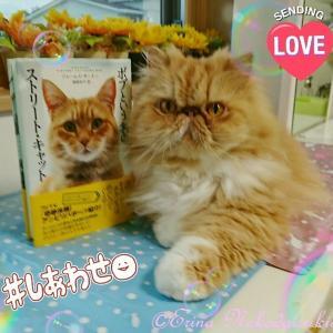 映画に感動!「ボブという名の猫 幸せのハイタッチ」8/26日本公開! ひとりの男の人生を救った奇跡の猫「ボブ」   | あらすじ | ジェームズさんからの心温まるメッセージ