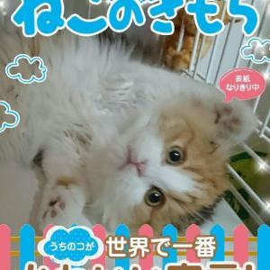 【猫動画あり】ニャにコレ?♡黄色いじゃらし手袋遊び!ねこのきもちの「うちのコが世界で一番かわいい宣言!」秋の「楽しい猫川柳5・7・5」と「愛猫もふもふ便り」&猫友のお誕生日おめでとうございます〓〓