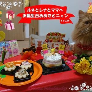 【愛猫お誕生日動画】秋と猫が好き!秋生まれのペルシャ猫ルネちゃん&スコティッシュのレナちゃん、4歳と1歳になりました!愛猫2にゃんとママの「Happy Birthday 」秋の猫川柳と生誕祭♪
