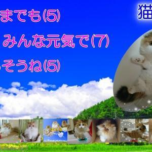 【飼い主必見!】猫がかかりやすい病気を知る!~愛猫といつまでも元気で健康に暮らすために~5月「端午の節句」男の子の健やかな成長を願う